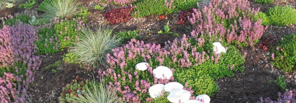 A vibrant, healthy living green roof